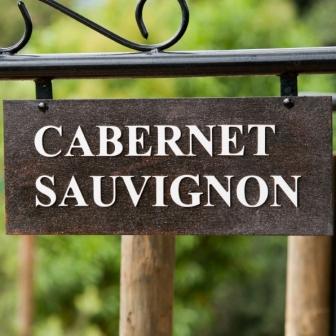 Cabernet Sauvignon 1